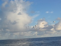 031206-BAIGNADE-OCEAN-TRANSATLANTIQUE-OUTDOOR-TDM-1